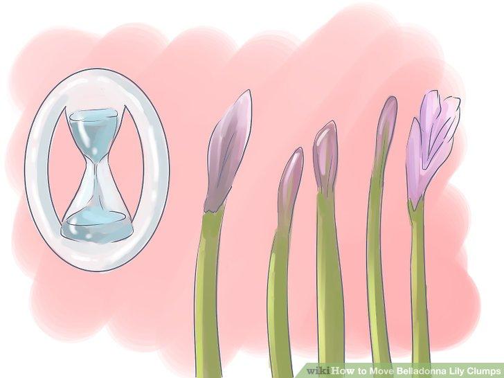 Warten Sie auf eine neue Blüte.