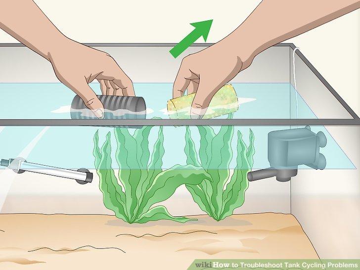 Reinigen Sie den Filter von Algen oder anderen Substanzen.