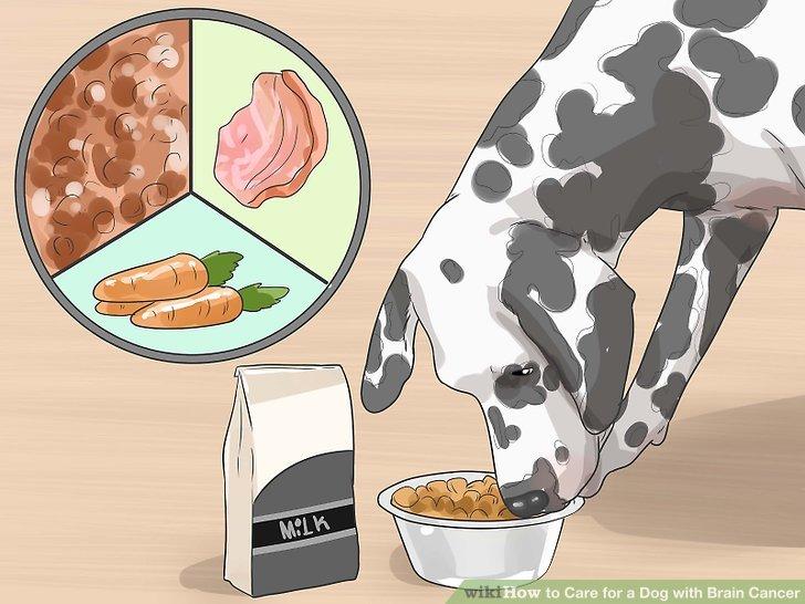 Überwachen Sie ihre Ernährung.