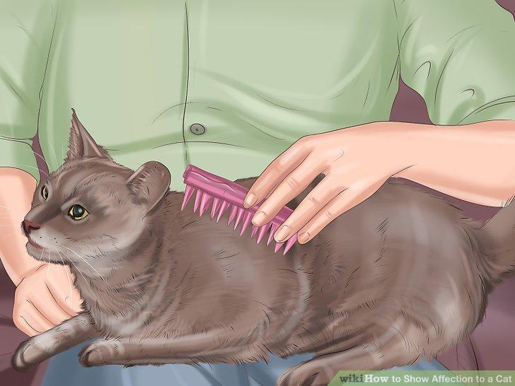 Halten Sie Ihre Katze gut gepflegt.
