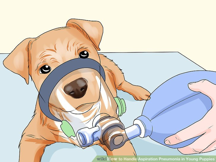 Lassen Sie Ihren Tierarzt eine unterstützende Therapie durchführen.