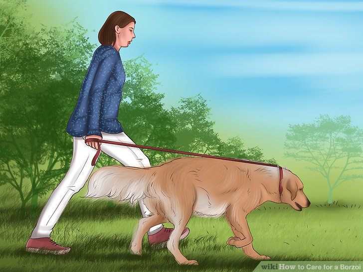 Take the dog out for a daily walk.