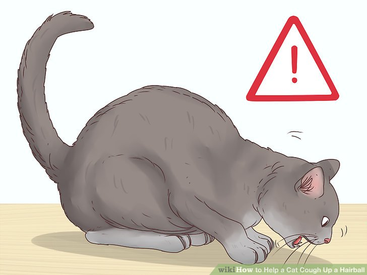 Notice if your cat hacks without bringing up a hairball.
