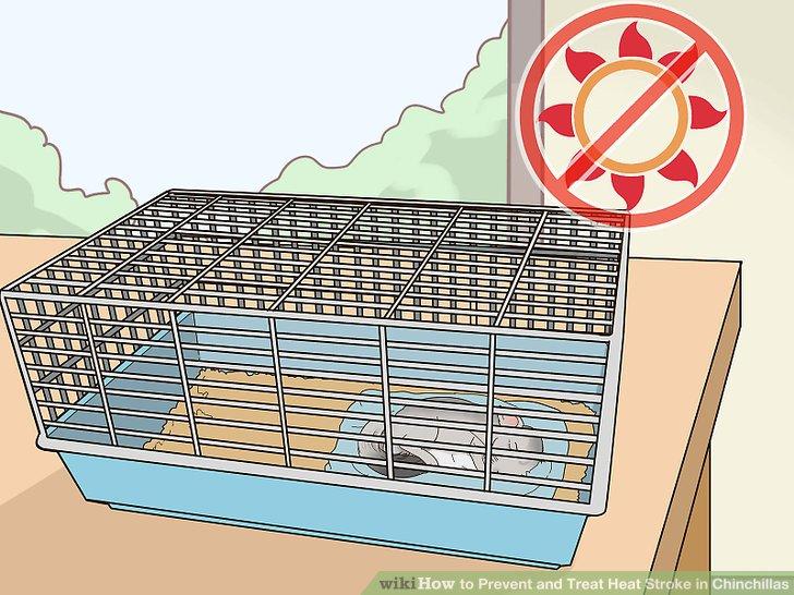 Platzieren Sie Ihren Chinchilla-Käfig vor direkter Sonneneinstrahlung.