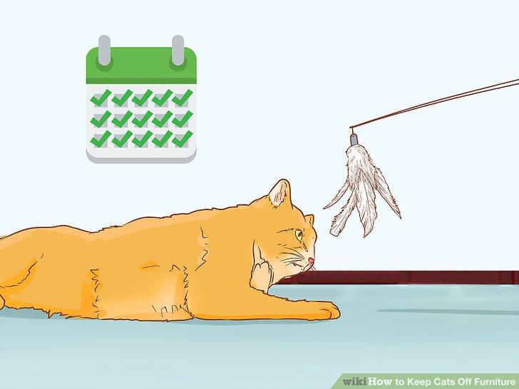 Kedinizle günlük oynayın.
