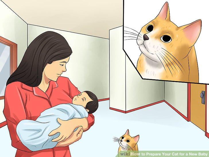 Begrüße deine Katze alleine, wenn du das Baby nach Hause bringst.