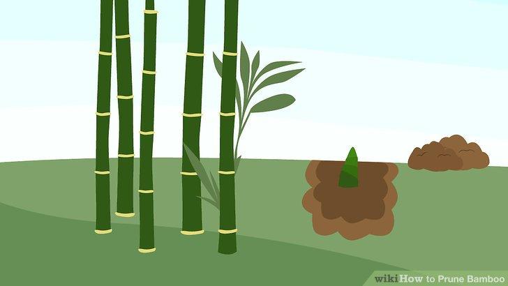 Entfernen Sie alle toten Blätter oder Stöcke von der Basis der Pflanze.