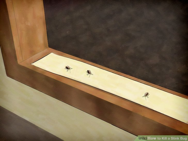 Lay out glue traps.