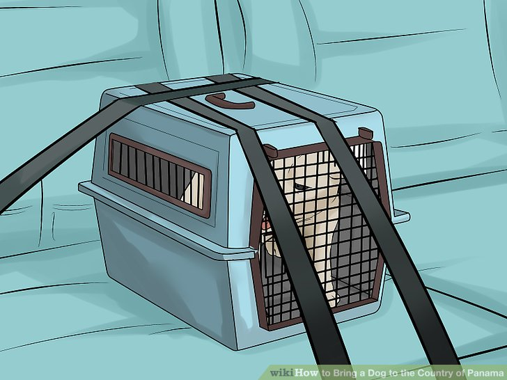 Transport your pet to the airport safely.