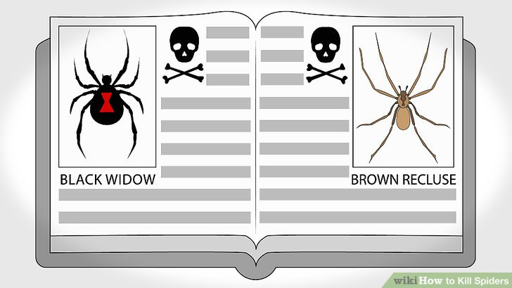 How to Kill Spiders 11 Steps with Pictures  wikiHow
