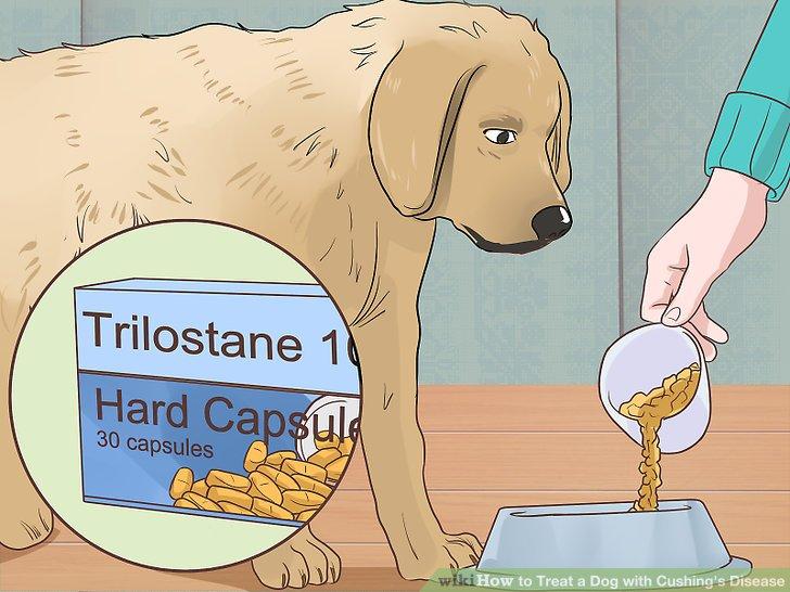 Geben Sie Ihrem Hund Trilostan wie vorgeschrieben.