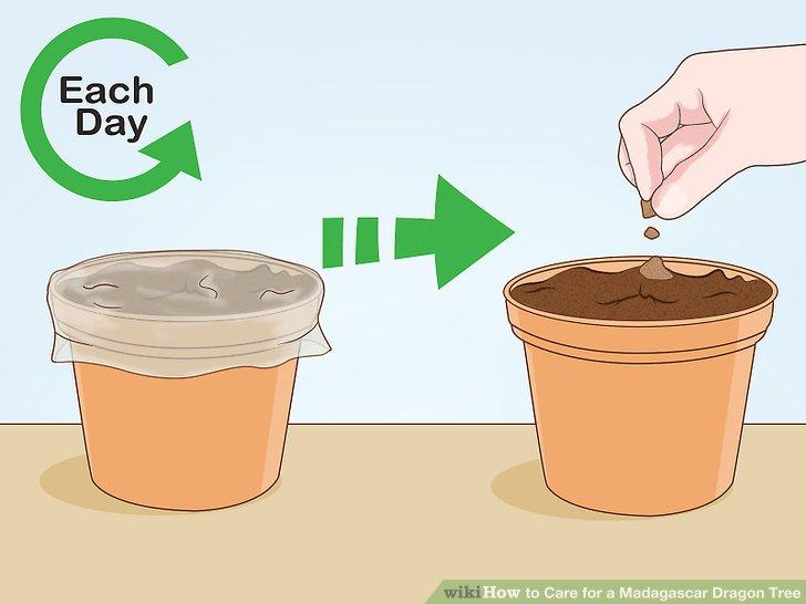 Decken Sie die Töpfe mit Plastik ab, um sie feucht zu halten.