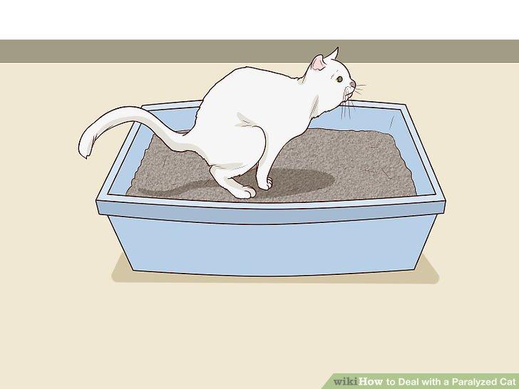 Holen Sie sich eine passende Wurfkiste für Ihre Katze.
