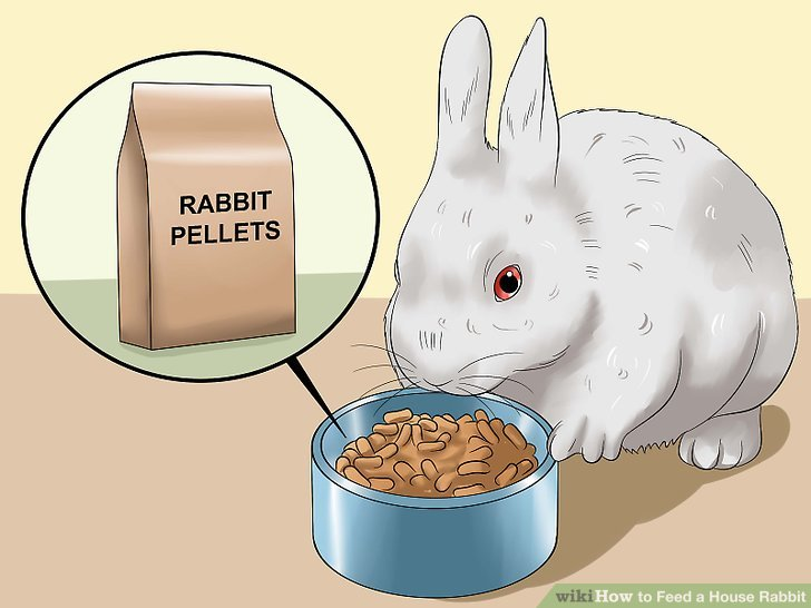 How To Feed A House Rabbit 10 Steps With Pictures WikiHow