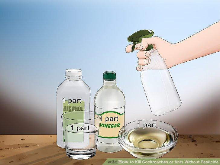 Make a roach spray.