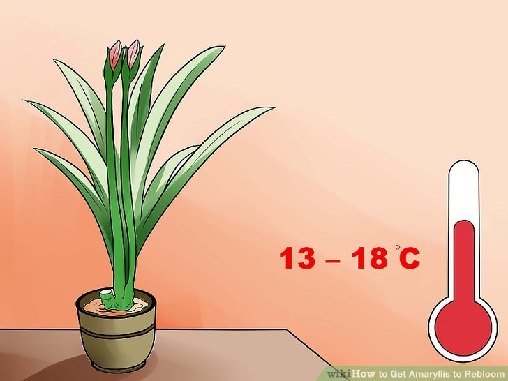 Keep the plant in a relatively warmer location.