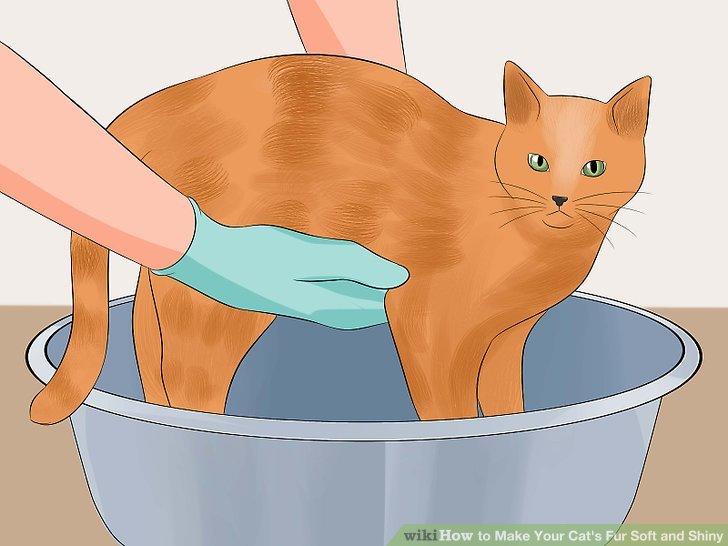 Legen Sie Ihre Katze vorsichtig in die Badewanne.