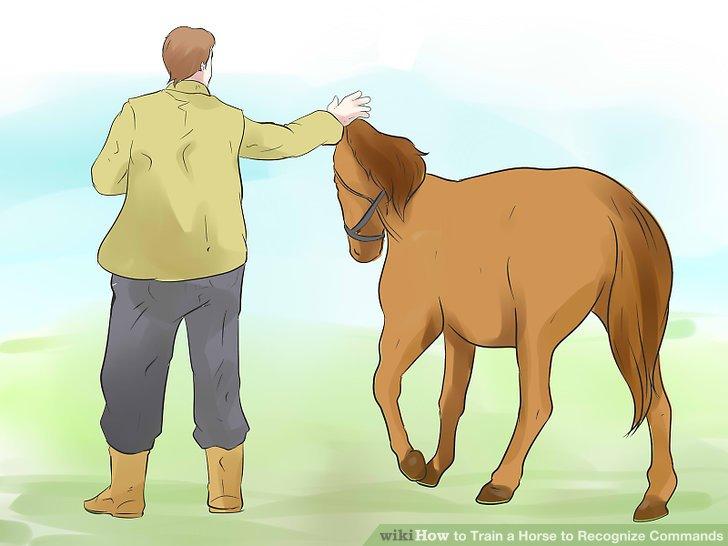Gewinnen Sie das Vertrauen der Pferde.