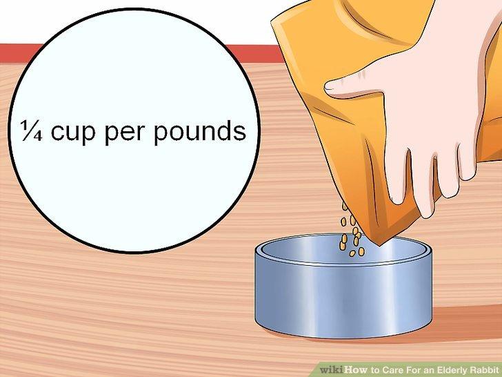 Füttern Sie Ihren Hasen entsprechend seinem Gewicht.