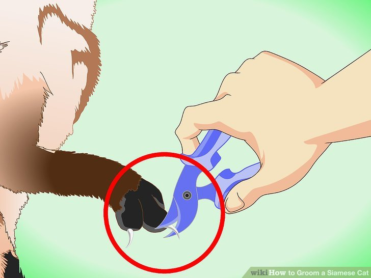 Ziehen Sie in Betracht, die Nägel Ihrer Katze professionell zu trimmen.