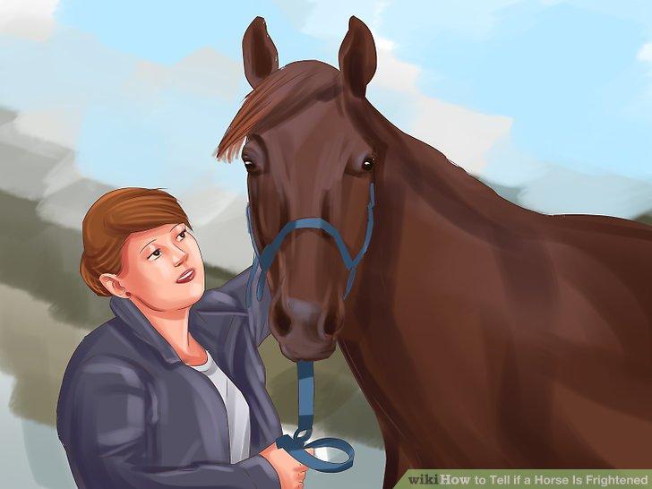 Lobe dein Pferd, wenn es unter Kontrolle ist.