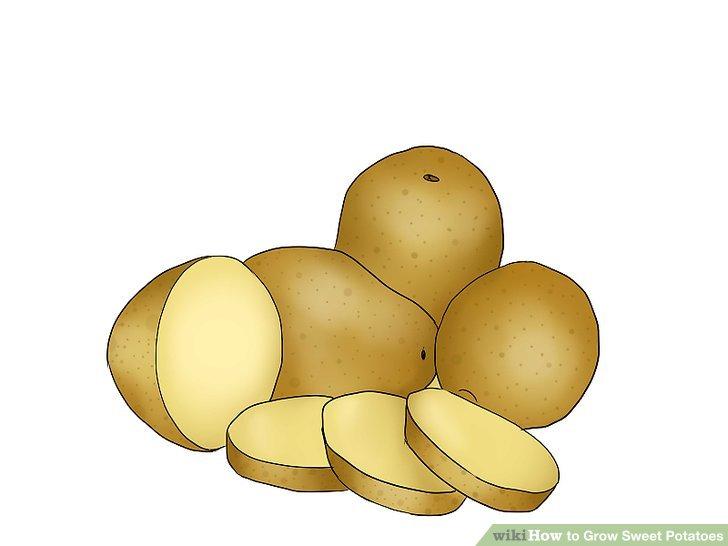 Bereiten Sie Ihre Kartoffel vor.