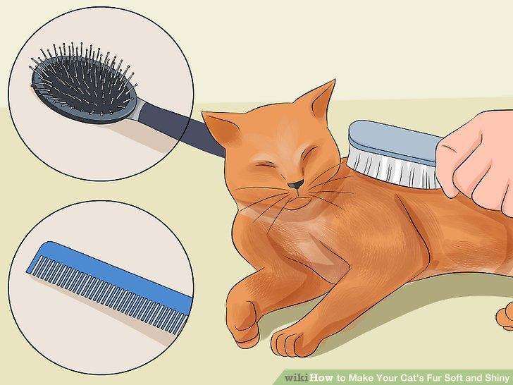 Bürste vorsichtig deine Katze.