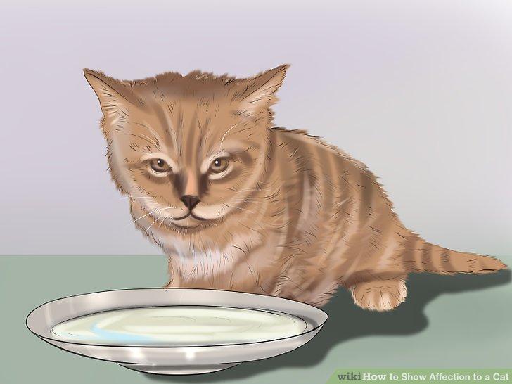 Nähren Sie Ihre Katze richtig.