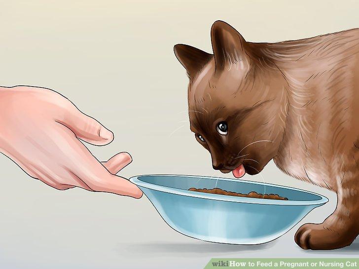 Geben Sie Ihrer Katze ständigen Zugang zu Futter.