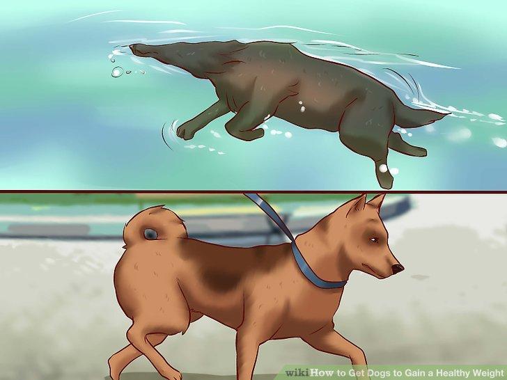 Stellen Sie sicher, dass Ihr Hund eine geeignete Übung erhält.