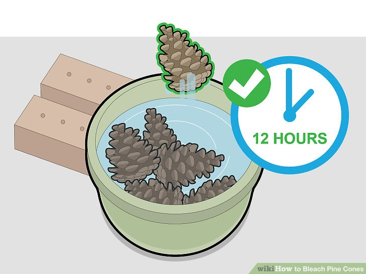 Check the pine cones after 12 hours.