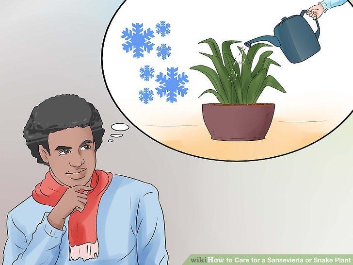 Im Winter oder in einem kühlen, klimatisierten Raum nur sehr wenig Wasser.