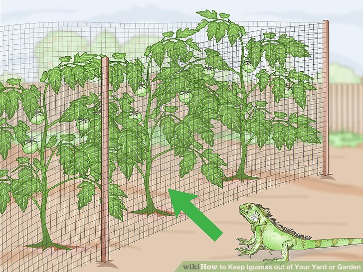 Pflanzen mit Hühnerdraht oder Geflecht schützen.