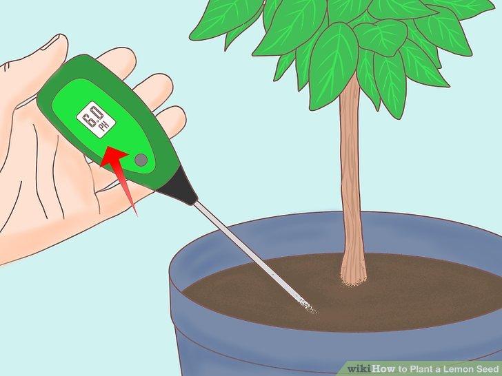 Pflegen Sie den pH-Wert des Bodens.