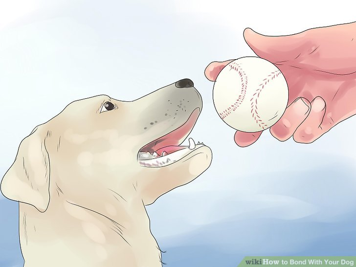 Play catch with your dog.