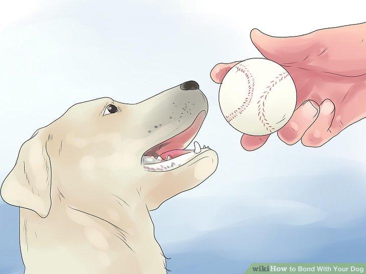 Spielen Sie mit Ihrem Hund.