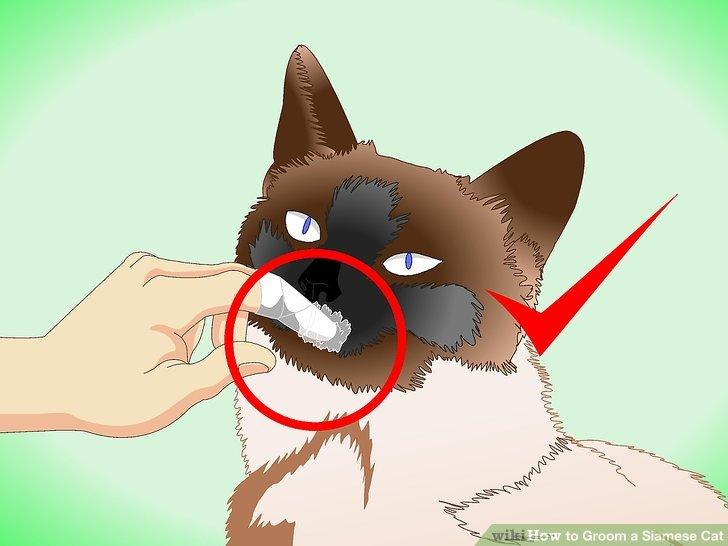 Versuchen Sie es mit einem Finger in Gaze, wenn Ihre Katze keine Zahnbürste mag.