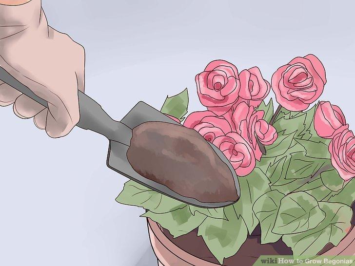 Maintain the garden plot.