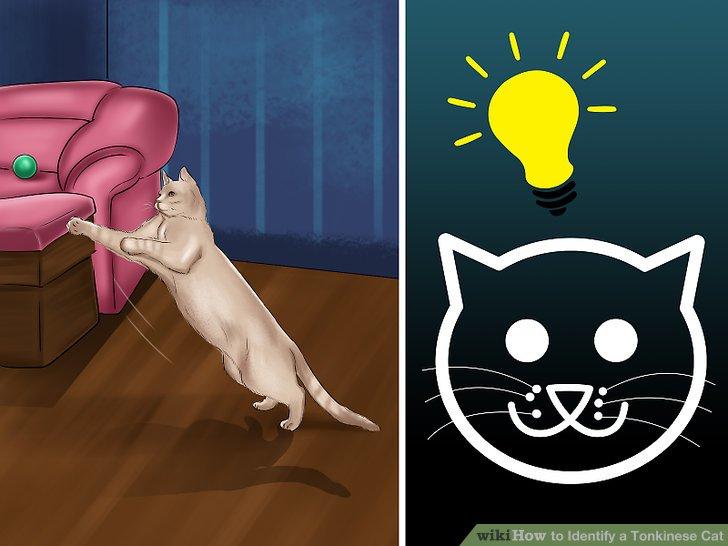 Stellen Sie fest, ob Sie eine intelligente Katze haben.