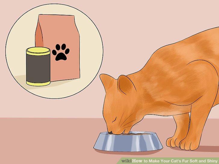 Füttern Sie Ihre Katze mit einer gesunden Ernährung.