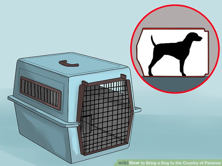 Select a suitable kennel.