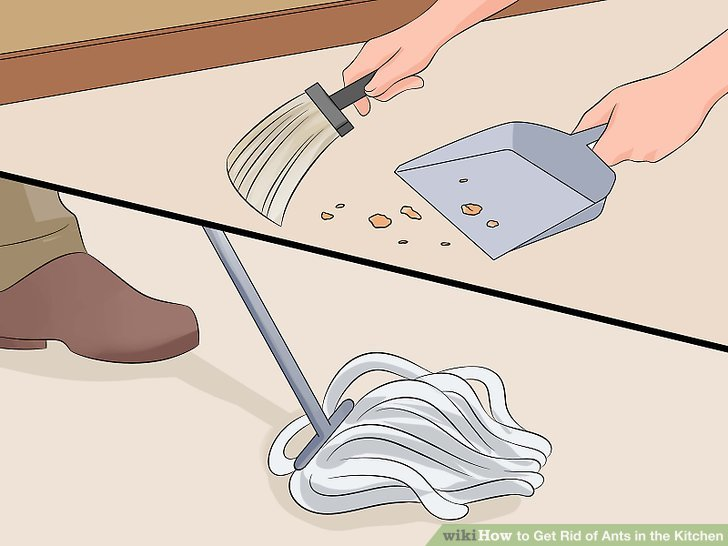 How to Get Rid of Ants in the Kitchen with Pictures