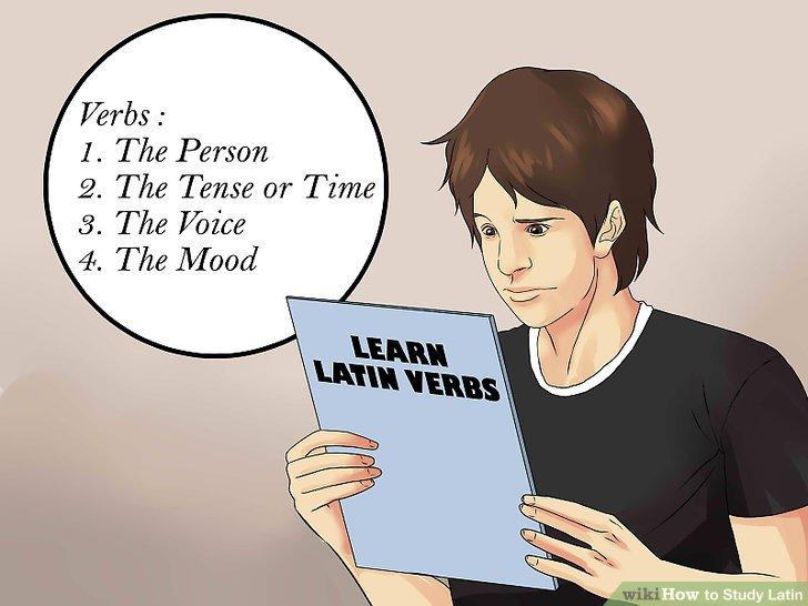 Learn Latin verbs.