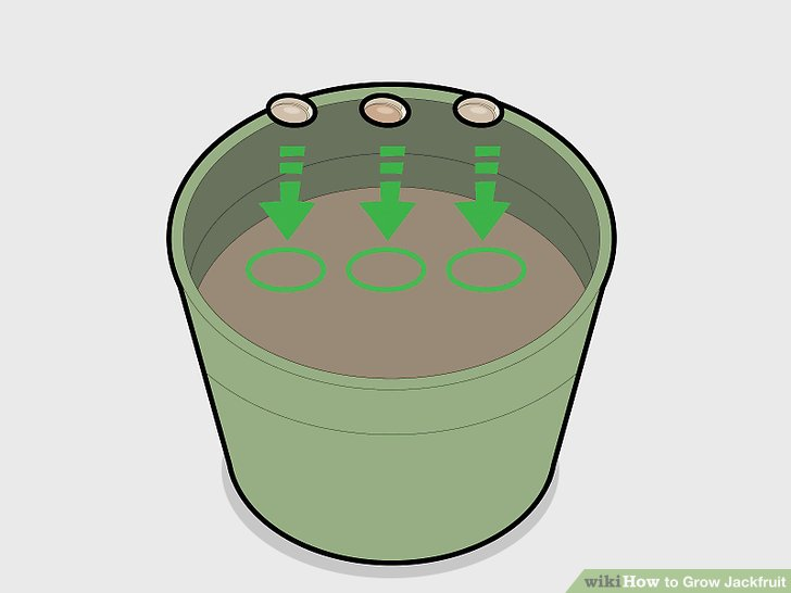 Sow at least 3 seeds into the prepared pot.