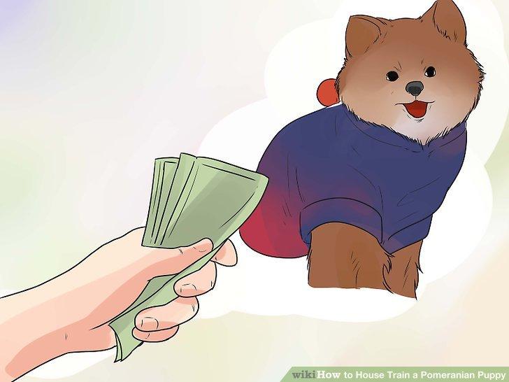 Kaufen Sie kaltes und / oder nasses Wetter für Ihren Hund.
