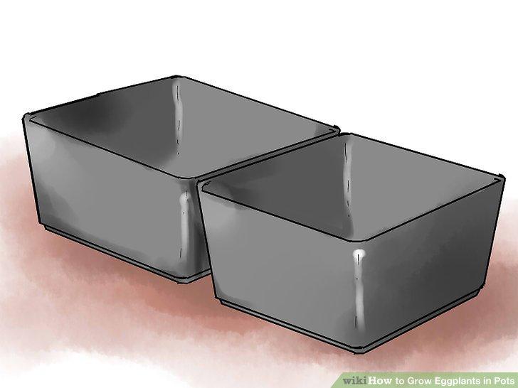 Kaufen Sie kleine Töpfe oder Gartenschalen aus Kunststoff, wenn Sie Ihre Auberginen mit Samen beginnen.