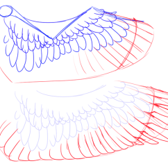 Eagle Wing Diagram Australian House Light Switch Wiring 3 Ways To Draw Wings Wikihow Image Titled Eaglewing 4 Png