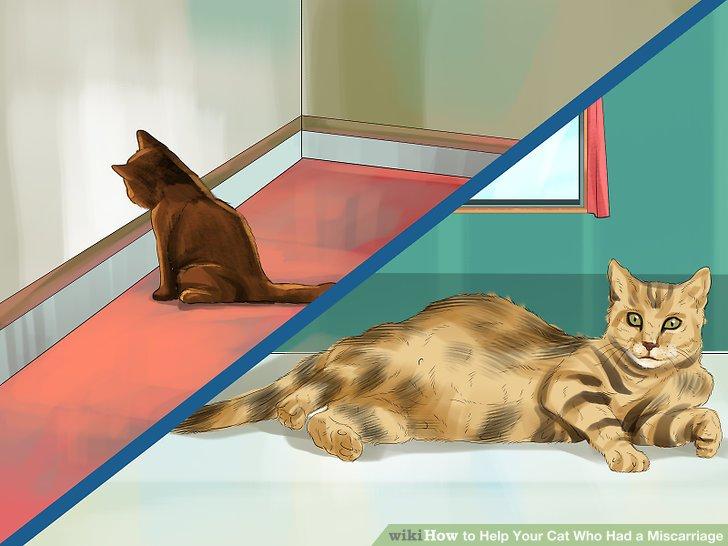 Wenn nötig, isoliere deine Katze.