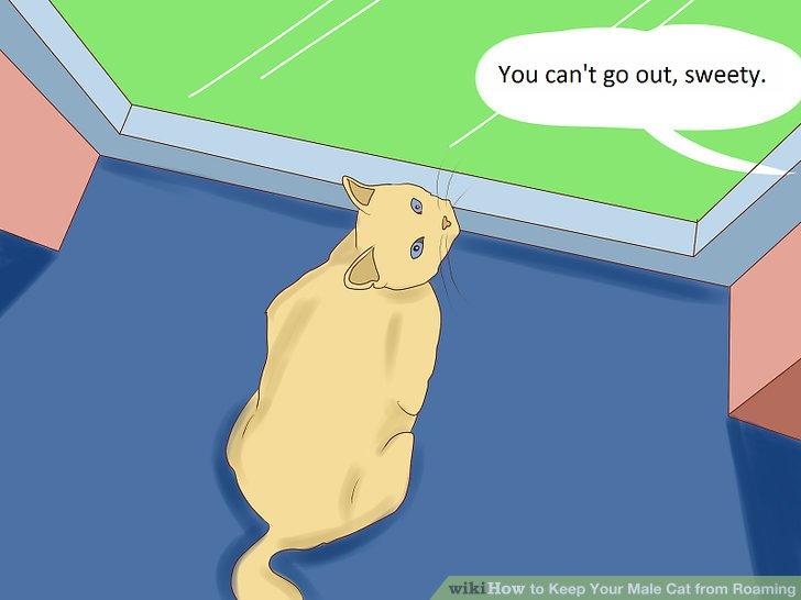 Widerstehen Sie, Ihre Katze draußen zu lassen.