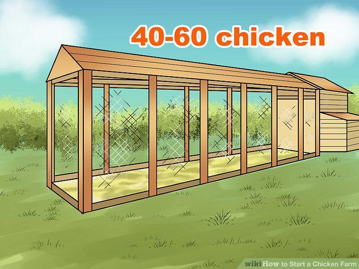 Baue einen Stall, der groß genug ist, um vierzig bis sechzig Hühner aufzunehmen.